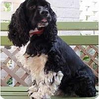 Adopt A Pet :: Hank - Sugarland, TX