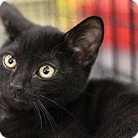 Adopt A Pet :: Diamond - Sacramento, CA
