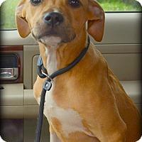 Adopt A Pet :: Sierra - Miami, FL