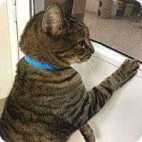 Adopt A Pet :: Jafar - Medina, OH