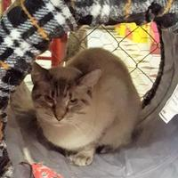 Adopt A Pet :: Psi - Erie, PA