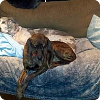 Adopt A Pet :: Kruger - Adopted! - Ontario, ON