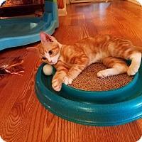 Adopt A Pet :: Flynn - Millersville, MD