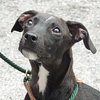 Adopt A Pet :: Ocoee - Brattleboro, VT