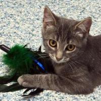 Adopt A Pet :: Charlie - Verona, WI