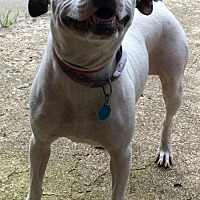 Adopt A Pet :: Sparkles - URGENT - Pewaukee, WI