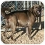 Photo 3 - Hound (Unknown Type)/Labrador Retriever Mix Dog for adoption in Berea, Ohio - Howie