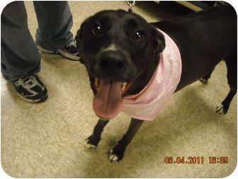 Labrador Retriever Mix Dog for adoption in Brownsville, Texas - Wendy