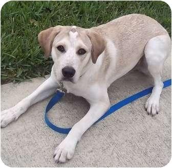 Hound (Unknown Type) Mix Dog for adoption in Largo, Florida - SPIKE