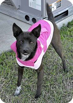 Terrier (Unknown Type, Small) Mix Dog for adoption in Corpus Christi, Texas - Emily