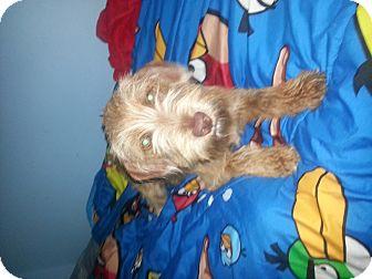 Terrier (Unknown Type, Medium) Mix Dog for adoption in Oviedo, Florida - Dixie