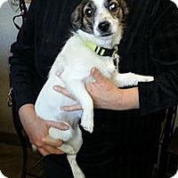 Adopt A Pet :: Patty - Kingwood, TX