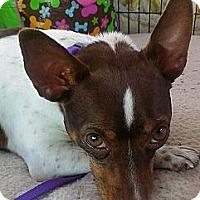 Adopt A Pet :: Lucy Lowrider - Oklahoma City, OK