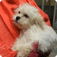 Adopt A Pet :: Christian ADOPTED!! - Antioch, IL