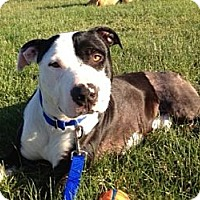 Adopt A Pet :: Donny - EXCELLENT family dog!! - Seattle, WA