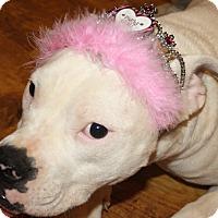 Adopt A Pet :: Pearl - Sacramento, CA