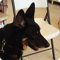 Adopt A Pet :: LUCA - SAN ANTONIO, TX