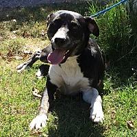 Adopt A Pet :: Ryan - Blanchard, OK