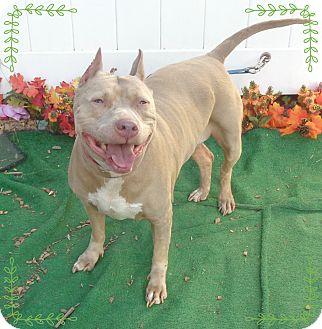 Pit Bull Terrier/American Pit Bull Terrier Mix Dog for adoption in Marietta, Georgia - BABY aka MAVIS (R)