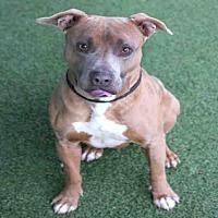 Adopt A Pet :: CANELO - Los Angeles, CA