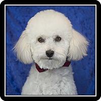 Adopt A Pet :: Charlie - San Diego, CA