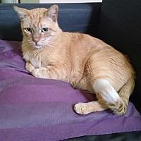 Adopt A Pet :: Odin - Santa Clarita, CA