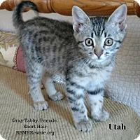 Adopt A Pet :: Utah - Temecula, CA