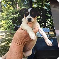 Adopt A Pet :: Ola - Hohenwald, TN
