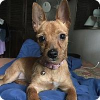 Adopt A Pet :: Cindy - Parsippany, NJ