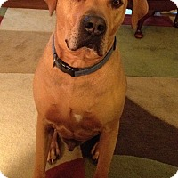 Adopt A Pet :: Hunter-COURTESY POST - Chesterfield, MI