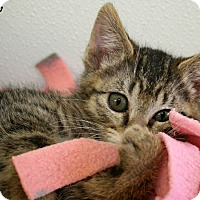 Adopt A Pet :: Thistle - Republic, WA