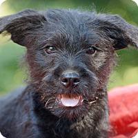 Adopt A Pet :: Mork - Glastonbury, CT