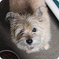 Adopt A Pet :: Zoe Jolie in RI $99 - Providence, RI