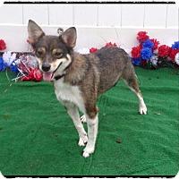 Adopt A Pet :: DAISEY REY - Marietta, GA