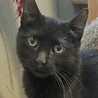 Adopt A Pet :: Kohl - Yukon, OK