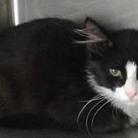 Adopt A Pet :: Hugo - Decatur, GA