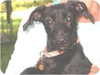 Dachshund Mix Dog for adoption in Bristol, Virginia - Jazzy