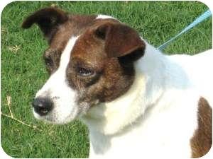 Terrier (Unknown Type, Medium) Mix Dog for adoption in Salem, New Hampshire - Sadie needs love!