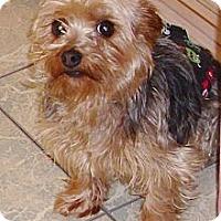Adopt A Pet :: Teddie - Orange, CA