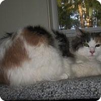 Adopt A Pet :: Princess - Shelton, WA