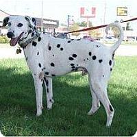 Adopt A Pet :: Tebow - Newcastle, OK