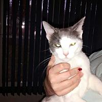 Adopt A Pet :: Kroger - Saint Albans, WV