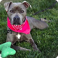 Adopt A Pet :: Beautiful Boo-VIDEO - Burbank, CA