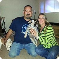 Adopt A Pet :: Fiona - Sacramento, CA