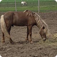 Adopt A Pet :: Silver - Dewey, IL
