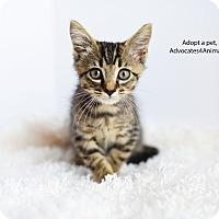 Adopt A Pet :: Peanut - Xenia, OH