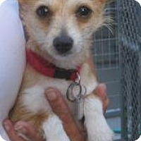 Adopt A Pet :: Sweet Pea - New palestine, IN