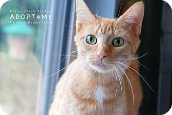 Domestic Shorthair Cat for adoption in Edwardsville, Illinois - Clementine