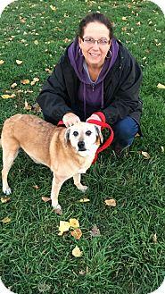 Beagle Mix Dog for adoption in Elyria, Ohio - Sandy