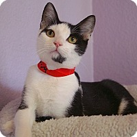 Adopt A Pet :: Jackson - Englewood, FL